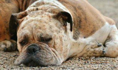 dogs-bark